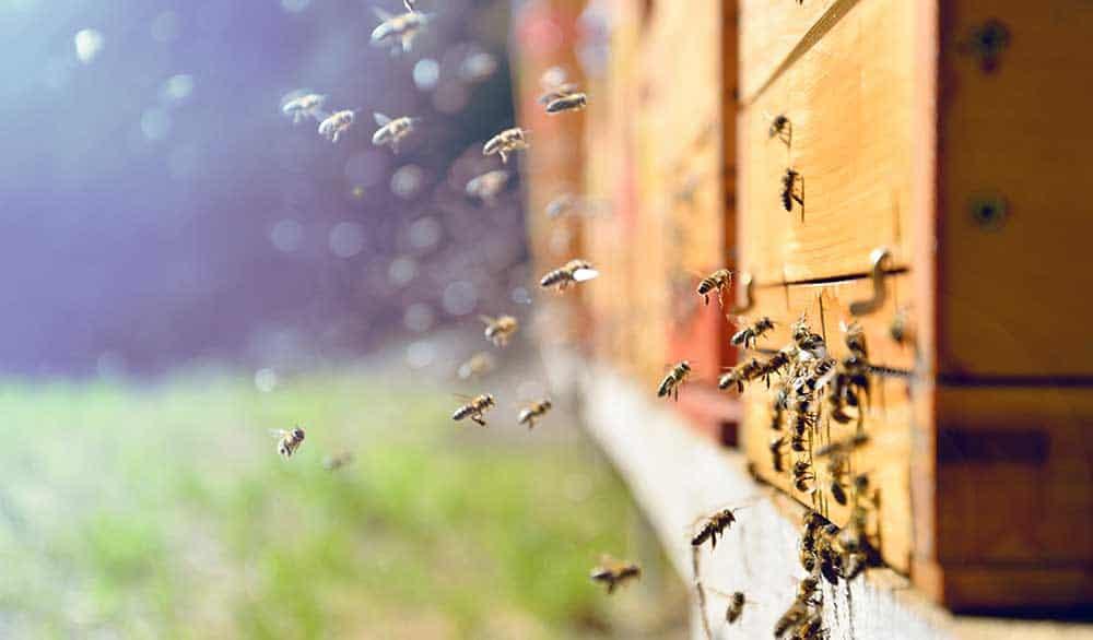 Das Bienenjahr im Überblick