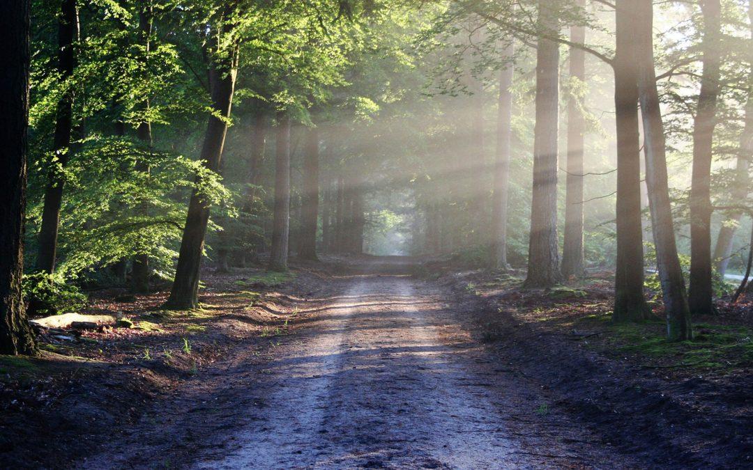 Umweltzertifikat Grüner Punkt