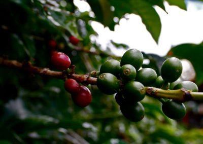 herbaria-kaffee1